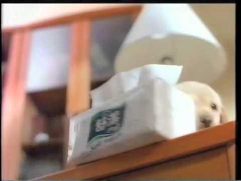 1998舒潔抽取式衛生紙Puppy2篇