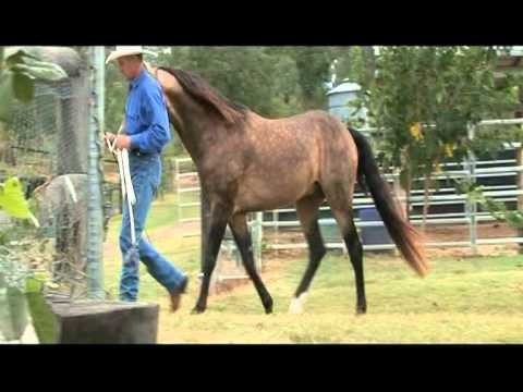 Welcome to Equivet Australia (Wilson's Equine Veterinary Services)