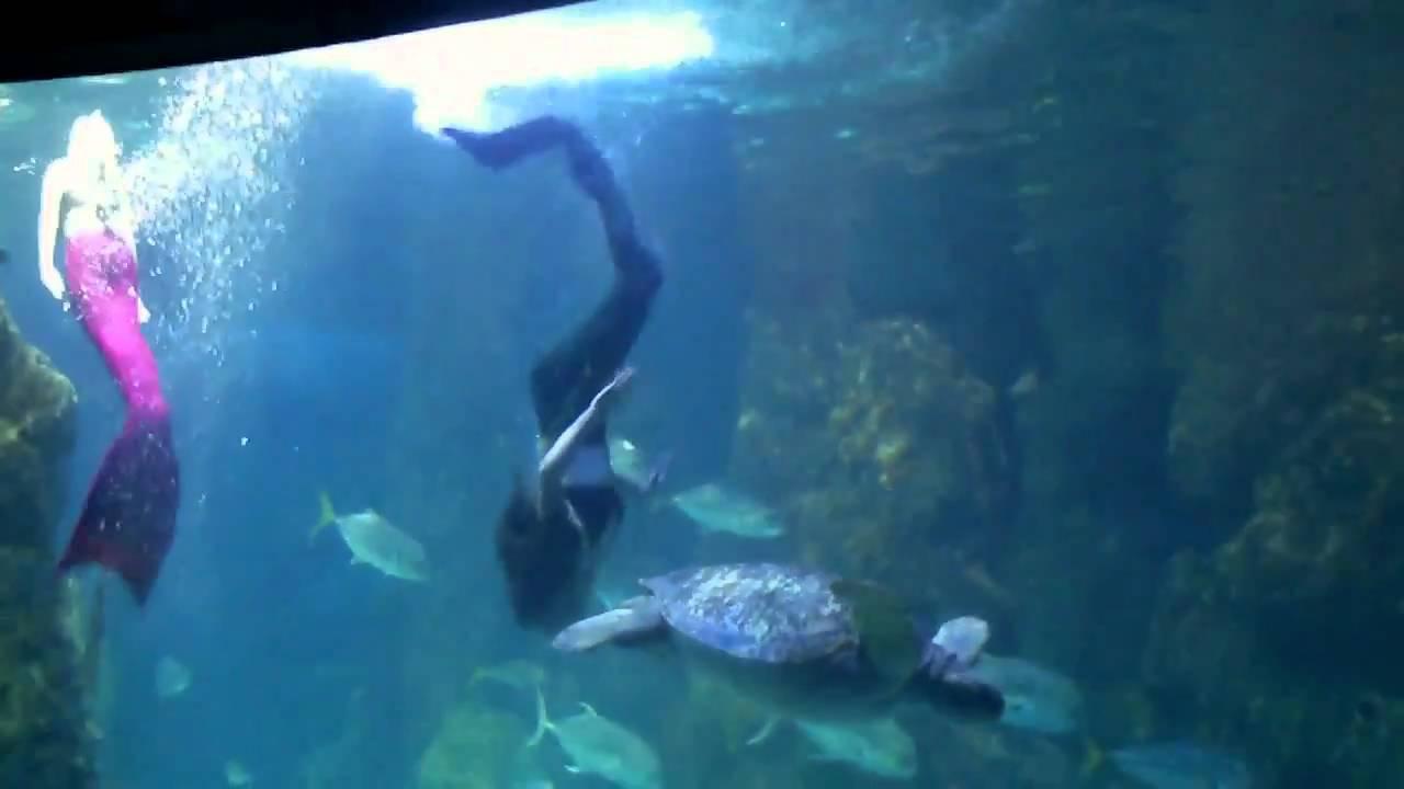 Mystic Mermaids Denver Aquarium Youtube