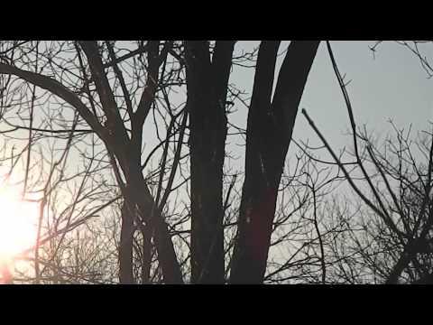 My Edited Home Video's Birds~Woodpecker~Moonlight~More
