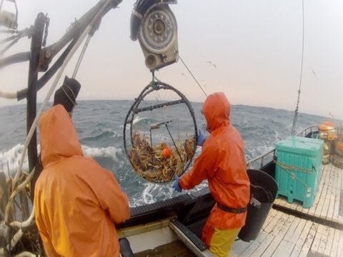 2013 Dungeness Crab Season Part 1