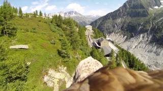 Eagle with GoPro Camera Flying over French Countryside