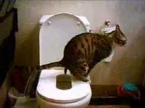 Cat Training Toilet Large 1 Youtube