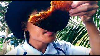 Bắt tổ ong ruồi trong đống củi