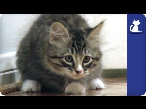 Kittens start to race - The Litter Episode 15 - Khloe Kardashian Odom