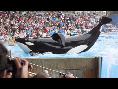 Blackfish - Official Trailer
