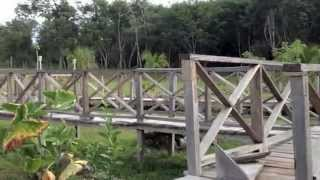 Hidden Bush House In Progresso Village, Corozal District