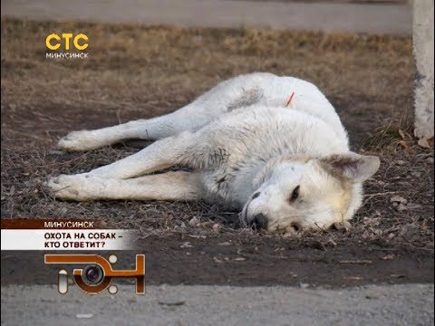 Охота на собак – кто ответит?