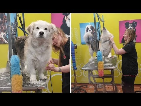 Pooch Feels Betrayed At Dog Groomers