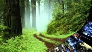 Kolibri i Dragan Lakovic - Šuma blista šuma peva