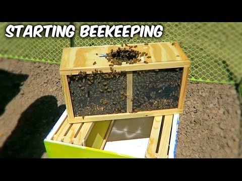 Starting Beekeeping - Vlog Week 1 Season 1