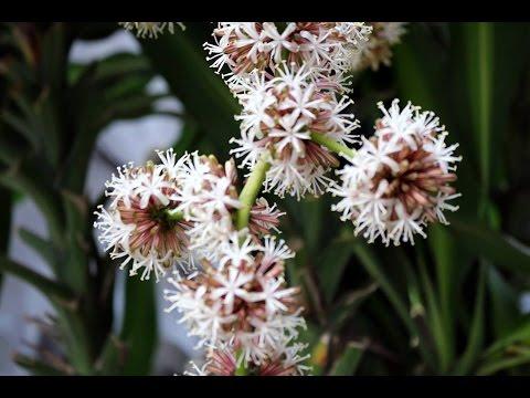 6 loại cây cảnh hút khí độc cực tốt nên trồng trong nhà