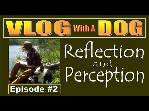 VLOG WITH A DOG  Episode 2. Reflection and Perception.