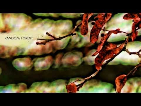 The Echelon Effect - Random Forest - Sea The Storm HD