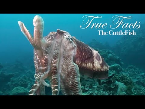 The CuttleFish Video
