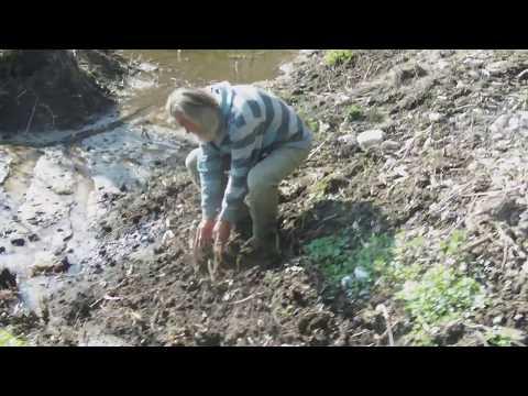 Onesnažena voda v Koritnem pri Bledu 1april 2017