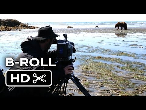 Bears B-ROLL - Katmai (2014) - Disneynature Documentary HD