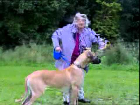 Woman and big dog very funny