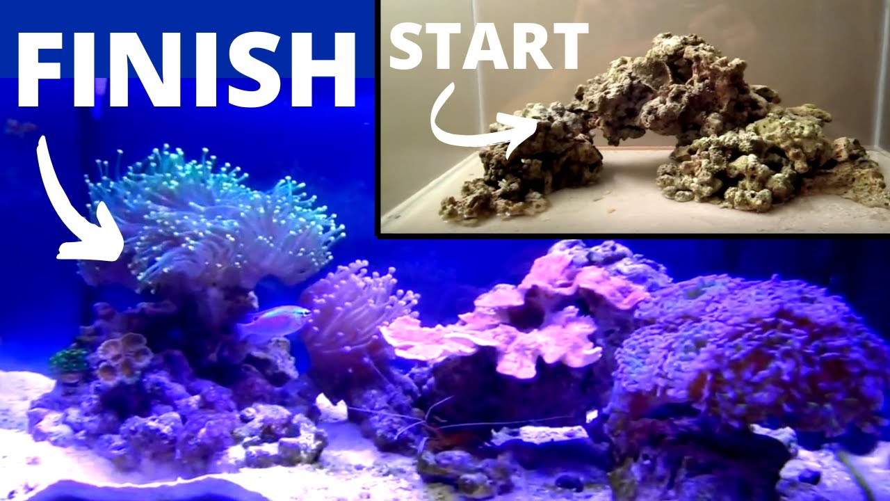 How to set up a Saltwater Aquarium - YouTube