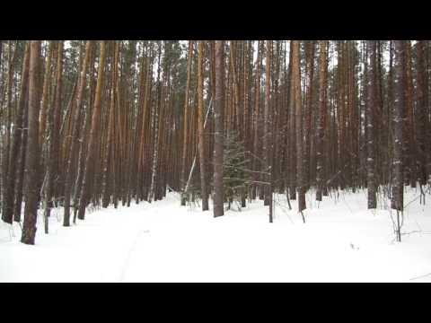 Прогулка на лыжах в лес Среднего Урала Свердловской области
