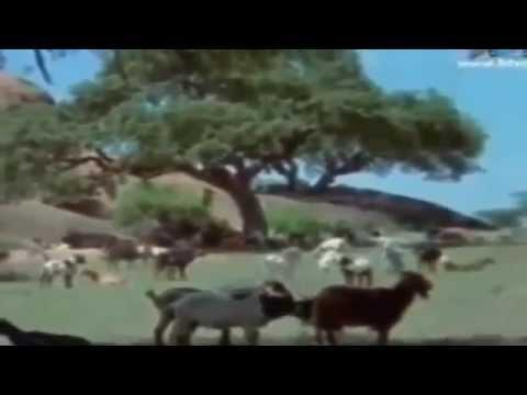 Đến Thượng Đế Cũng Phải Cười Phần 1 Full HD