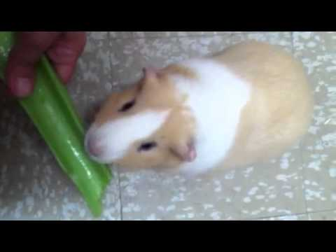 Avalon likes his celery