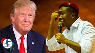 Julius Malema No Nonsense Response to Trump's Twitter Threats