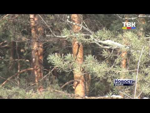 Бердчане по закону могут собирать. Но всякое ли сухое дерево можно считать валежником?