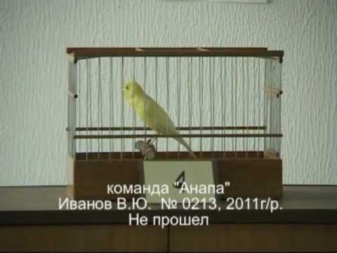 Краснодарский конкурс пения кенара