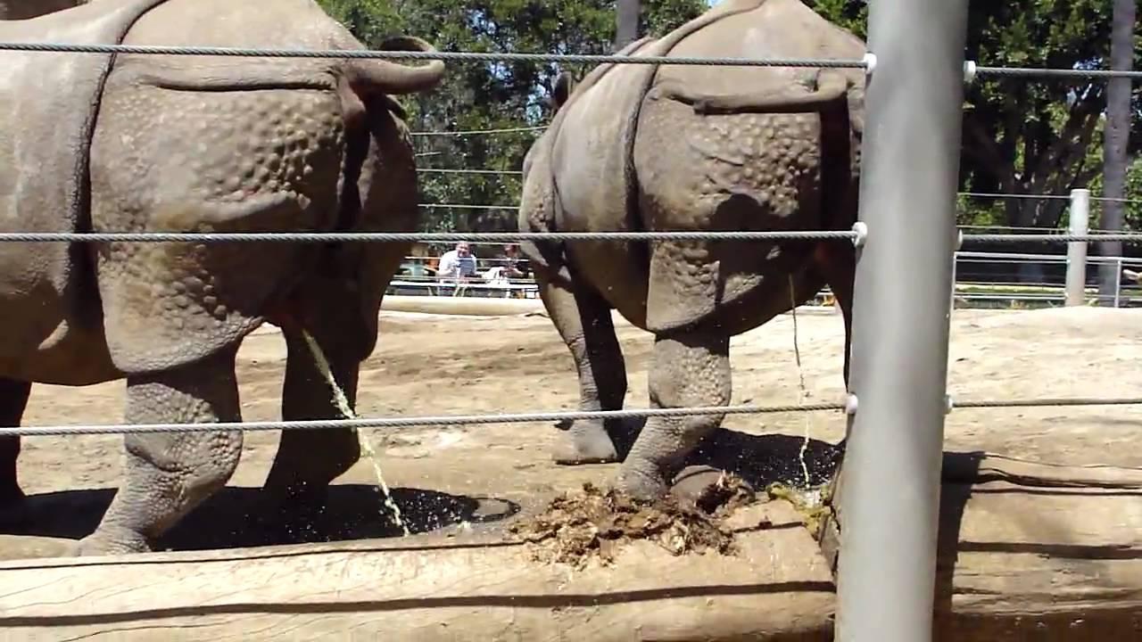 Hippo Explosive Diarrhea Rhino Fun Time - YouTu...