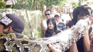 World's Biggest Snake 2014 World's Biggest Snake Found
