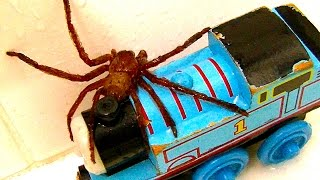 Big Spider On The Bath Toys Dyson GoPro Cam Catching Spiders