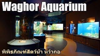 Waghor Aquarium in King Mongkut Memorial Park