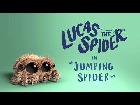 Pavou Lucas - skákajíci pavouk