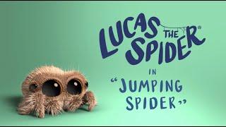 Pavúk Lucas  - Skákajúci pavúk