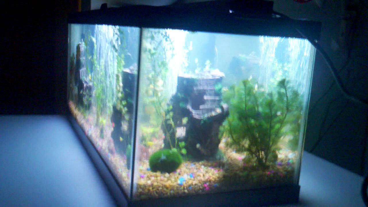 10 gallon fish tank live plants live plants in aquariums for Aquarium fish online