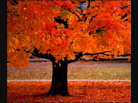 Four Seasons ~ Vivaldi
