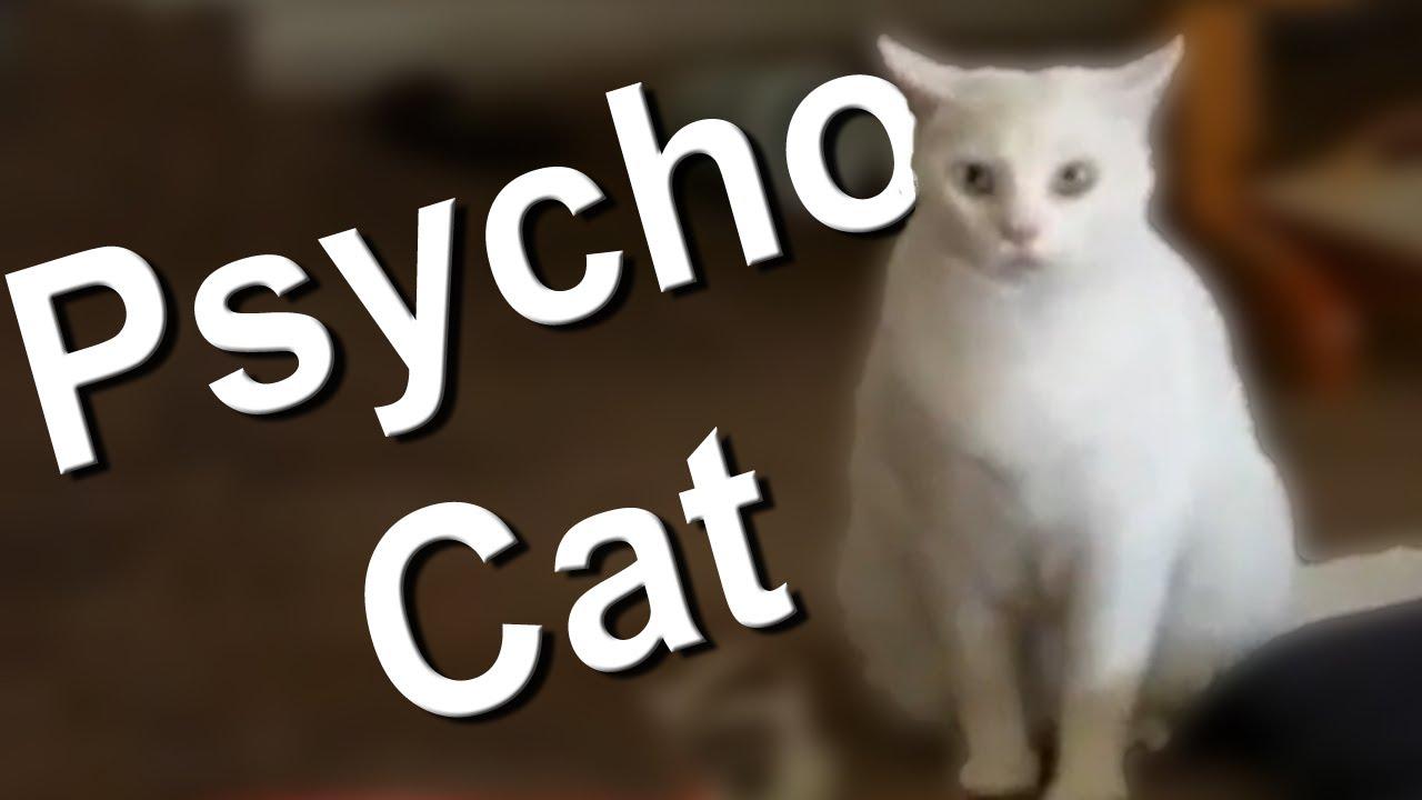 Faireset Cat Videos