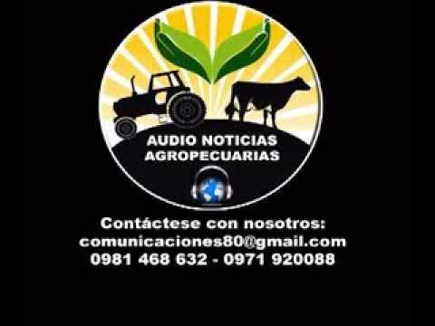 AUDIO NOTICIAS AGROPECUARIAS 30 11 13