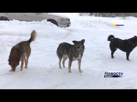 Осторожно: злые собаки! Не пора ли вешать такие таблички на улицах Бердска?