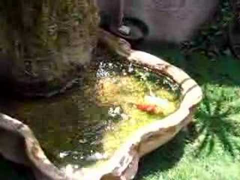 Fuente con peces youtube for Peces para fuente exterior
