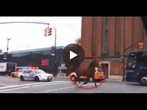 فيديو  نيويورك تشهد مطاردة غريبة بين ...