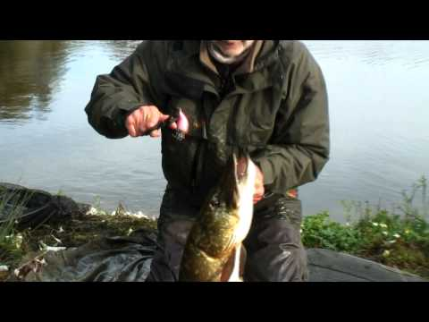 Mick Brown attrape un poisson avec un Rapala Angry Bird