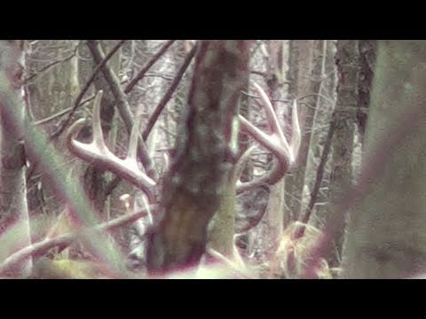 Flintlock Muzzleloader Deer Hunting 2011 Big Buck Pennsylvania #2