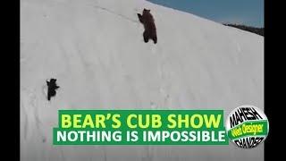 El oso insistente...