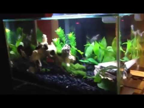 Fluval Edge with Neon Tetras