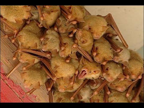 公共電視 我們的島─預約幸蝠 - YouTube