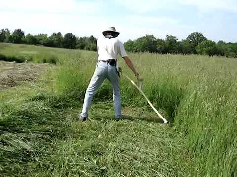 Mowing with a Swiss snath and 65cm Austrian Scythe Blade.