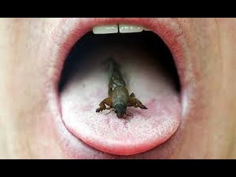Can Eating Insects Save the World BBC full Documentary 2013