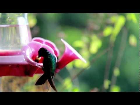 Observación de aves (Colibríes) en Venezuela, Uso sostenible de la biodiversidad.